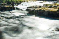 δασικό μικρό ρεύμα Στοκ φωτογραφία με δικαίωμα ελεύθερης χρήσης