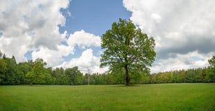 δασικό πράσινο καλοκαίρι Στοκ Εικόνες