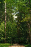 δασικό πράσινο καλοκαίρι Στοκ εικόνες με δικαίωμα ελεύθερης χρήσης