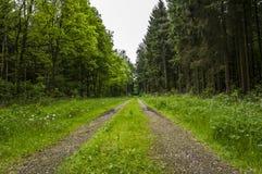 δασικό πράσινο μονοπάτι Στοκ φωτογραφία με δικαίωμα ελεύθερης χρήσης