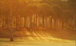 δασικό πράσινο πεύκο Στοκ φωτογραφία με δικαίωμα ελεύθερης χρήσης