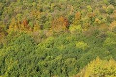 δασικό δρύινο φως του ήλιου σχεδίου συνόρων ανασκόπησης φθινοπώρου βελανιδιών Στοκ φωτογραφία με δικαίωμα ελεύθερης χρήσης
