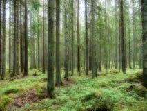 δασικό δρύινο φως του ήλιου σχεδίου συνόρων ανασκόπησης φθινοπώρου βελανιδιών Στοκ φωτογραφίες με δικαίωμα ελεύθερης χρήσης
