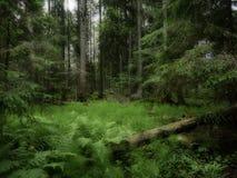 δασικό δρύινο φως του ήλιου σχεδίου συνόρων ανασκόπησης φθινοπώρου βελανιδιών Στοκ Εικόνα