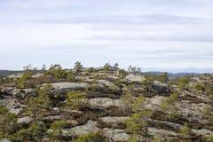 δασικό τοπίο ημέρας ηλιόλουστο Στοκ Φωτογραφίες