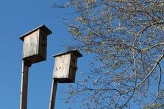 δασικό ψαρόνι άνοιξη πεύκων σπιτιών Στοκ εικόνα με δικαίωμα ελεύθερης χρήσης
