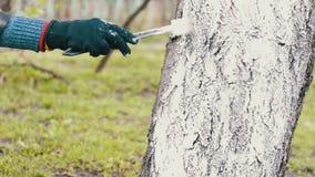 Ασπρίστε την εποχή δέντρων την άνοιξη απόθεμα βίντεο