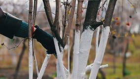 Ασπρίστε την εποχή δέντρων την άνοιξη φιλμ μικρού μήκους