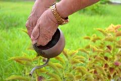 λασπωδών καρφιών πόδια γυναικών φυτών κόκκινων ποτίζοντας στοκ φωτογραφία με δικαίωμα ελεύθερης χρήσης