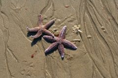 αστέρια δύο στοκ φωτογραφία