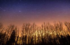 Αστέρια και ελαφριά ρύπανση επάνω από το σκιαγραφημένο δέντρο Στοκ Φωτογραφία