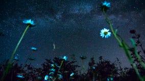 Αστέρια στον ουρανό στη βαθιά νύχτα σε έναν κήπο Chamomile απόθεμα βίντεο