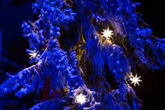 Αστέρια Χριστουγέννων σε ένα δέντρο έλατου Στοκ Φωτογραφία