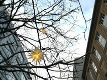 Αστέρια Χριστουγέννων στα δέντρα στην οδό του ST Βόλφγκανγκ Στοκ Εικόνες