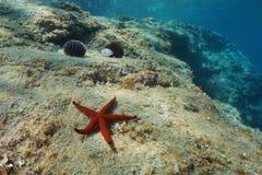 Αστέρι Ερυθρών Θαλασσών στην υποβρύχια Μεσόγειο βράχου Στοκ Εικόνες
