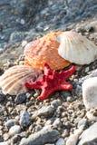 Αστέρι Ερυθρών Θαλασσών, κοχύλια θάλασσας, παραλία πετρών, καθαρό νερό Στοκ Εικόνες