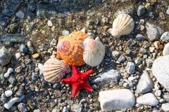 Αστέρι Ερυθρών Θαλασσών, κοχύλια θάλασσας, παραλία πετρών, υπόβαθρο καθαρού νερού Στοκ Εικόνες