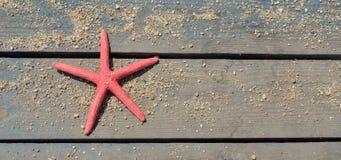 Αστέρι Ερυθρών Θαλασσών στον πάγκο παραλιών Στοκ Εικόνες