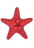 Αστέρι Ερυθρών Θαλασσών Στοκ Φωτογραφία