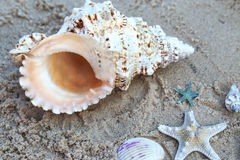 Αστέρι θάλασσας και κοχύλια θάλασσας που βάζουν πάνω από την άμμο στην παραλία Στοκ φωτογραφία με δικαίωμα ελεύθερης χρήσης