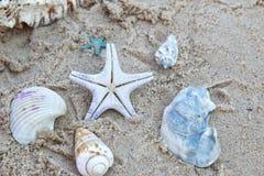Αστέρι θάλασσας και κοχύλια θάλασσας που βάζουν πάνω από την άμμο στην παραλία Στοκ Εικόνα