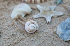 Αστέρι θάλασσας και κοχύλια θάλασσας που βάζουν πάνω από την άμμο στην παραλία Στοκ Φωτογραφίες