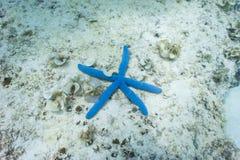 Αστέρι θάλασσας Στοκ Εικόνες