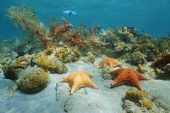 Αστέρι θάλασσας μαξιλαριών υποβρύχιο με το κοράλλι και το σφουγγάρι Στοκ Εικόνα