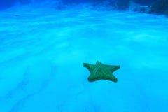 Αστέρι θάλασσας μαξιλαριών Στοκ φωτογραφία με δικαίωμα ελεύθερης χρήσης