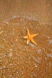 Αστέρι θάλασσας στο νερό στην άκρη της θάλασσας και του εδάφους Στοκ εικόνα με δικαίωμα ελεύθερης χρήσης