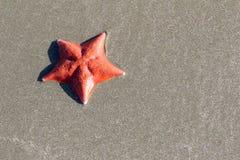 Αστέρι θάλασσας στο υπόβαθρο άμμου στοκ εικόνα