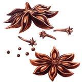 Αστέρι και γαρίφαλα γλυκάνισου που απομονώνονται διανυσματική απεικόνιση