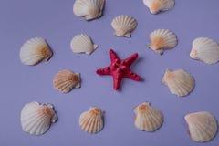 Αστέρι και θαλασσινά κοχύλια Ερυθρών Θαλασσών Στοκ φωτογραφία με δικαίωμα ελεύθερης χρήσης