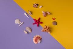 Αστέρι και θαλασσινά κοχύλια θάλασσας γύρω Στοκ φωτογραφία με δικαίωμα ελεύθερης χρήσης