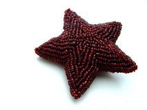 αστέρι μαργαριταριών Στοκ Φωτογραφίες