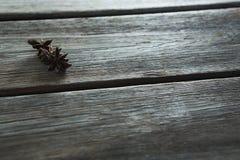 Αστέρι anises στον ξύλινο πίνακα Στοκ Φωτογραφίες