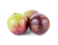 Αστέρι Apple, Chrysophyllum Cainito Στοκ φωτογραφία με δικαίωμα ελεύθερης χρήσης