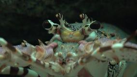 Αστακοί και θαλάσσια ζωή απόθεμα βίντεο