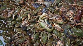 Αστακοί στην αγορά ψαριών απόθεμα βίντεο