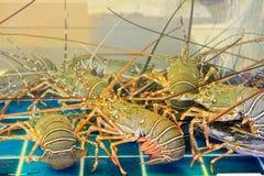 Αστακοί στο ενυδρείο, κατάστημα θαλασσινών Στοκ φωτογραφία με δικαίωμα ελεύθερης χρήσης