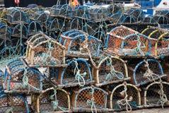 αστακός ψαροκόφινων Στοκ Φωτογραφίες