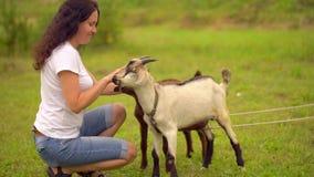 Αστεία αίγα στο αγρόκτημα αιγών αγροτουρισμός, ζώα αγροκτημάτων Οικογένειες που επισκέπτονται το κοινοτικό αγρόκτημα, κορίτσι που απόθεμα βίντεο