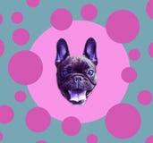 αστεία αφίσα Γαλλικό μπουλντόγκ στη σφαίρα Το σκυλί είναι σύμβολο του κινεζικού νέου έτους Στοκ Φωτογραφία