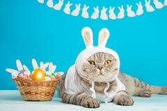 Αστεία γάτα λαγουδάκι Πάσχας, χαριτωμένη με τα αυτιά και τα αυγά Πάσχας Υπόβαθρο και σύνθεση Πάσχας στοκ φωτογραφία με δικαίωμα ελεύθερης χρήσης