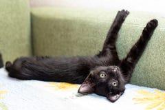 Αστεία γάτα σε ένα άνετο σπίτι στοκ εικόνα