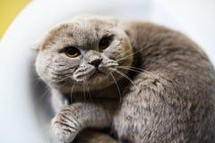 Αστεία γάτα στο νεροχύτη λουτρών Στοκ εικόνα με δικαίωμα ελεύθερης χρήσης