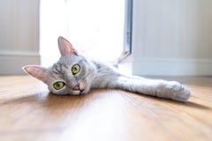 Αστεία γάτα στο σπίτι στοκ εικόνα
