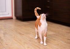 Αστεία γάτα στο σπίτι στοκ φωτογραφίες με δικαίωμα ελεύθερης χρήσης