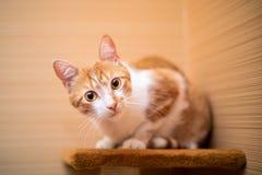 Αστεία γάτα στο σπίτι στοκ εικόνες με δικαίωμα ελεύθερης χρήσης