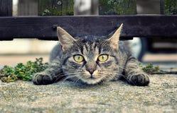Αστεία γάτα Στοκ Φωτογραφίες